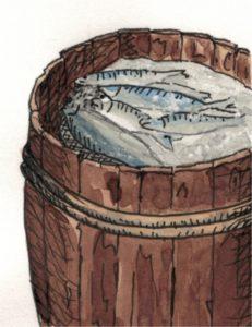 Zeichnung Fass mit eingesalzenen Heringen